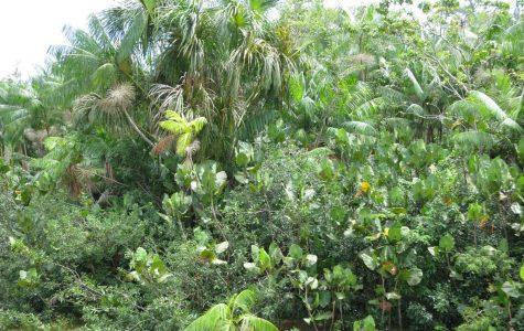 The Other Amazon, Forgotten