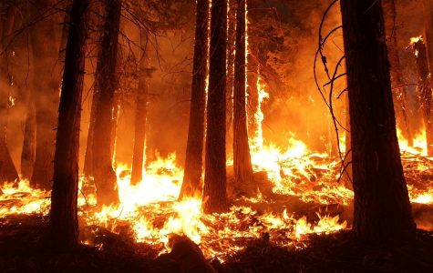 The Era of Wildfires